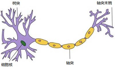 MATLAB神经网络系列学习之开篇